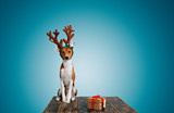 Fototapety Adorable puppy wearing reindeer antlers sitting next to a gift box with red bow tilts his head and looks into the camera on light blue background.