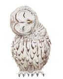 Fototapety cute white owl