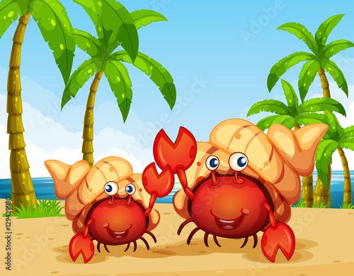 kraby-na-plazy,-palmy,-morze,-bajki