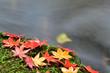 秋の渓流風景
