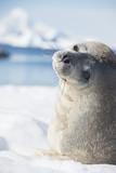 Glimpsing Seal