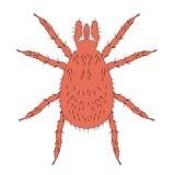 2d cartoon illustration of tick