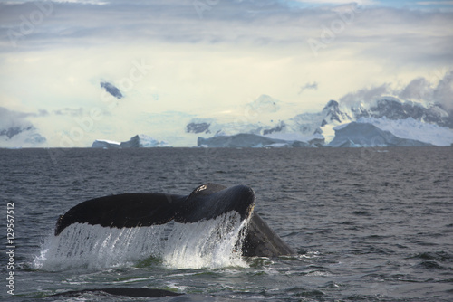 Foto op Canvas Antarctica mountain whale