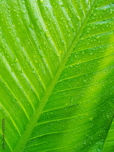 Green leaf and bubble with texture and pattern Poster