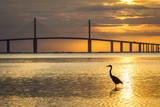 Great Blue Heron silhouetted at sunrise - St. Petersburg, Florid