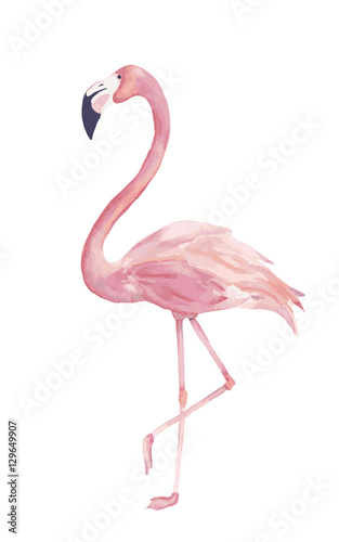 Watercolor exotic flamingo. Summer decoration print for wrapping, cards, t-shirts, clipart