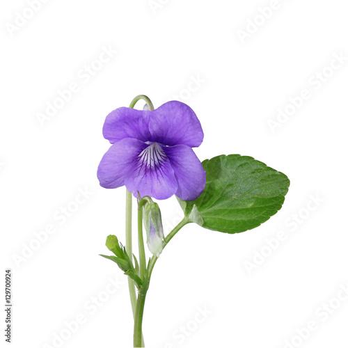 Violette Poster