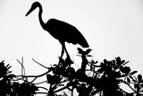 shadow of an egret