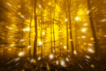 Abstract motion blurred gold colored foggy forest tree fairytale landscape with dreamy firefly lights.