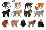 Big set of different Monkeys - 129805719