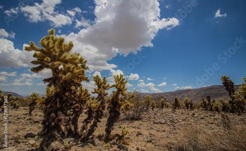 Poster Tunesië Deserto e cactus