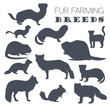 Fur farming. Flat design