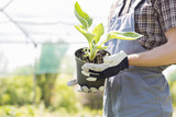 Fototapety Midsection of gardener holding potted plant at nursery
