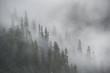 Misty Rainforest, Stikine River, Alaska