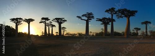 Foto op Aluminium Baobab Atardecer en la Avenida de los Baobabs
