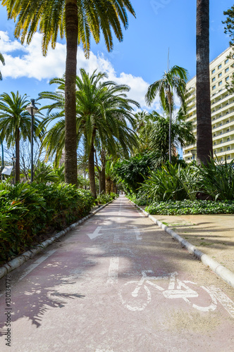 Bike lane to cycle between palm trees in Malaga, Spain