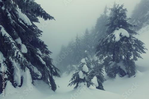 Aluminium Winterlandschap Winter forest.Instagram filter