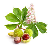 Fototapety Horse-chestnut (Aesculus) fruits with leawes and flower.