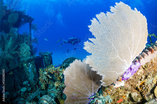 Foto op Canvas Schipbreuk SCUBA Divers Swimming Around an Old, Coral Encrusted Shipwreck