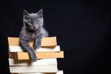 Un chaton gris couché sur une pile de livre