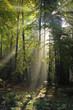 Poranne promienie słońca w jesiennym lesie