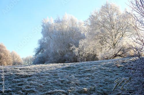 Fotobehang Vestingwerk Winter Wald