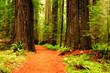 Quadro Hiking Trail in Muir Woods