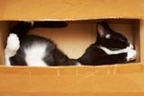 Making a funny cat. - 130498793