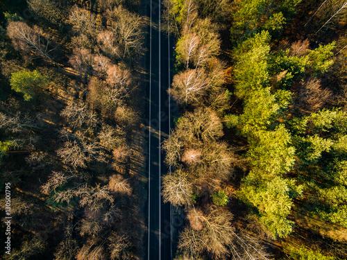 In de dag Weg in bos Las dron jezdnia