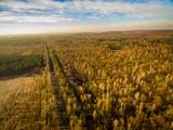 Karczowanie lasu panorama