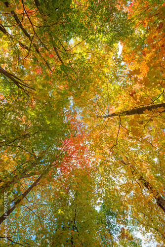 Canopy of Fall Colors Poster