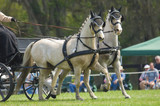 Combined driving competition, Welsh Pony team hitch