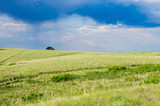 Blossoming spring steppe stormy sky