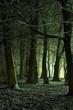 Nachts im Winterwald