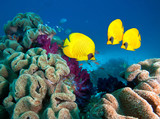 Photo of beautiful  coral colony.