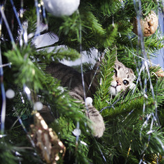 Cat on Christmas tree. New Year