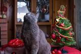 Британский кот на столе рядом с рождественской елкой