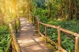 wood bridge in rainforest