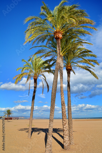 Nature landscape with palm trees on Malvarrosa beach in Valencia