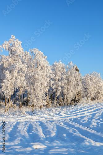 Plexiglas Berkenbos Wintry rural landscape with snow and frost