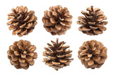 Pine cones isolated on a white background, with clipping path - 130917191