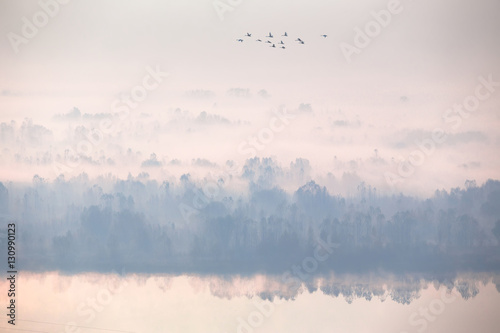 Beautiful autumn foggy morning. Aerial view, flock of swans flying.