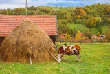 Autumn landscape in Transylvania