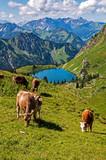 Kühe am Seealpsee im Hochformat