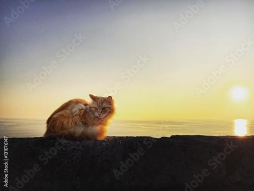 Gatto al tramonto