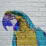 Art urbain, Ara bleu - 131084163