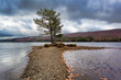 Wyman Lake in Maine late fall with a lone tree along a gravel path.