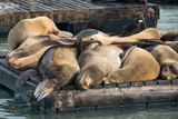 Group of sea lion on the pier
