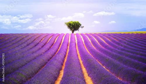 Fotobehang Lavendel The tree in the lavender