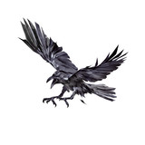 painted black crows attacking